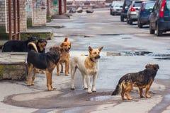 Verdwaalde honden op straat Stock Foto