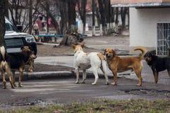 Verdwaalde honden op straat Royalty-vrije Stock Afbeelding