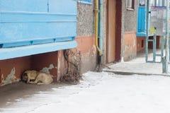 Verdwaalde honden op straatslaap Stock Fotografie