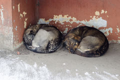 Verdwaalde honden op straatslaap Royalty-vrije Stock Afbeelding