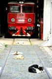 Verdwaalde honden in Roemenië Royalty-vrije Stock Afbeeldingen