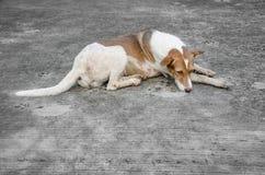 Verdwaalde Hondslaap op grond Stock Foto
