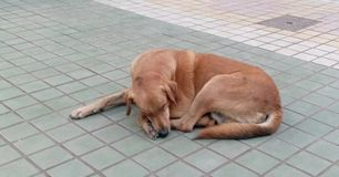 Verdwaalde hondslaap vreedzaam royalty-vrije stock foto