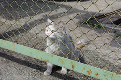 Verdwaalde jonge witte kat stock afbeeldingen