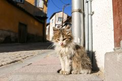 Verdwaalde kat Stock Foto's