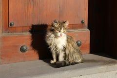 Verdwaalde kat Royalty-vrije Stock Afbeeldingen