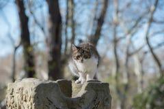 Verdwaalde kat bij de oude ruïnes Stock Foto's