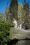 Verdwaalde kat bij oude ruïnes 3 stock afbeelding