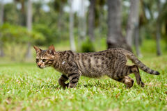 Verdwaalde Kat die in Lang Gras loopt Stock Fotografie