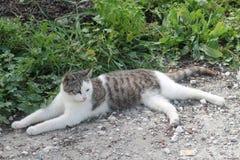 Verdwaalde kat die op de grond liggen stock afbeelding
