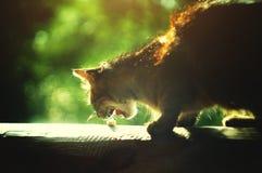Verdwaalde kat die stuk van kaas eten Royalty-vrije Stock Foto's