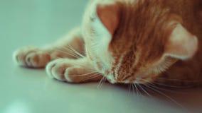 Verdwaalde kat die in wachttijd met hoop liggen Stock Afbeelding