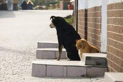 Verdwaalde kat en hond op een straat royalty-vrije stock afbeelding