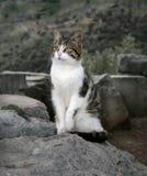 Verdwaalde kat - Griekenland Royalty-vrije Stock Foto