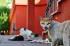 Verdwaalde kat in Istanboel Royalty-vrije Stock Foto's