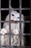 Verdwaalde kat in kooien. stock fotografie
