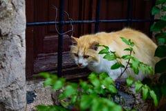 Verdwaalde kat met jagers` s starende blik het in evenwicht brengen op de barst van een venster van een rijtjeshuis Stock Afbeelding