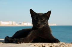 Verdwaalde kat op Cadiz, Spanje Royalty-vrije Stock Afbeeldingen