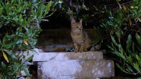 Verdwaalde kat op de stoep in de nacht stock video