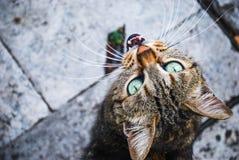 Verdwaalde kat op de straten van Rome, Italië royalty-vrije stock fotografie