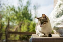 Verdwaalde kat op een doos die zijdelings eruit zien Royalty-vrije Stock Foto