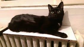 Verdwaalde kat op een radiator Stock Foto's