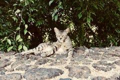 Verdwaalde kat op het Grote Eiland in Hawaï stock afbeeldingen