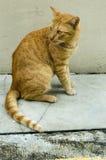 Verdwaalde kat in Singapore royalty-vrije stock foto's
