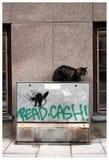 Verdwaalde kat in Stockholm Stock Foto