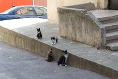 Verdwaalde katten Stock Foto