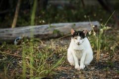 Verdwaalde katten royalty-vrije stock afbeeldingen
