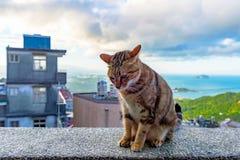 Verdwaalde kattensittin op een muur in Jiufen-dorp royalty-vrije stock foto's