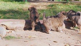 Verdwaalde puppy die lui buiten spelen stock footage