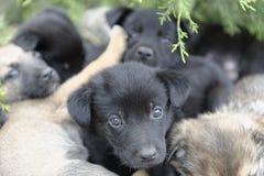 Verdwaalde puppyhonden royalty-vrije stock afbeelding