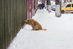 Verdwaalde slechte hond Stock Afbeelding