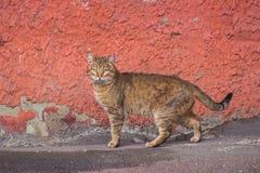 Verdwaalde straatkatten dichtbij industriezone Stock Afbeeldingen