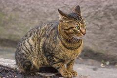 Verdwaalde straatkatten dichtbij industriezone Stock Foto