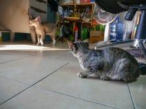 Verdwaalde Tabby Kitty Breaking in de Zaal royalty-vrije stock foto's