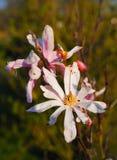 Verdwijn bloem langzaam Royalty-vrije Stock Afbeeldingen