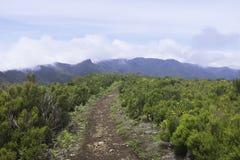 Vereda do Fanal τοπ περίπατος βουνών κοντά σε Seixal, Μαδέρα Στοκ Φωτογραφία