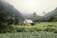 Vereda gör Fanal går nära Seixal, Royaltyfri Fotografi