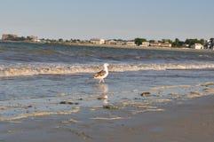 Verehren Sie Strand stockfotos