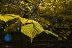Vereinigte Farben des Herbstes in einem forrest Stockfotografie