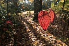 Vereinigte Farben des Herbstes in einem forrest Lizenzfreie Stockbilder