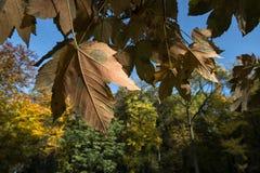 Vereinigte Farben des Herbstes in einem forrest Stockfotos