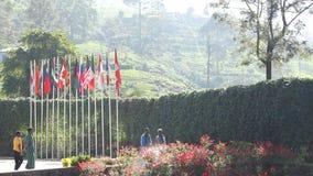 Verenigde vlaggen stock videobeelden