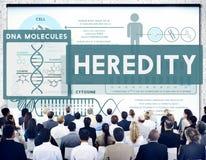 Vererbungs-Biologie-Chromosom-molekulares Wissenschafts-Konzept lizenzfreie stockbilder