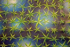 Verf op Canvas: Abstracte Kunst met Veelvoudige Groene Bladeren op Zwarte Achtergrond stock afbeelding