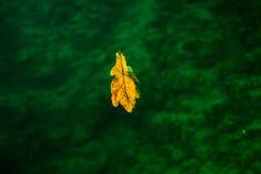 Verfallendes Blatt Underwater Lizenzfreies Stockfoto