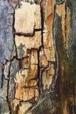 Verfallenes Holz Stockbild